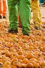 Oranges after Carnevale d'Ivrea