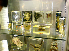 Animal specimens at the Hunterian Museum, London