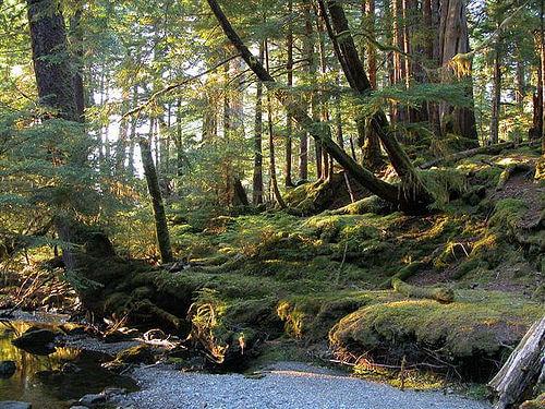 Gwaii Haana National Park, British Columbia, Canada