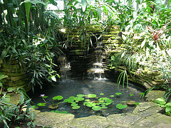 Lily pond at Garfield Park Conservatory