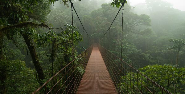 Bridge in the Monteverde Reserve, Costa Rica