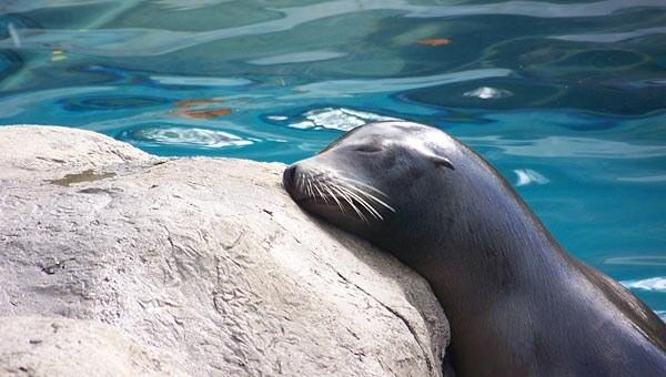 A seal at the Pittsburgh Aquarium