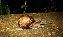 The snail that posed