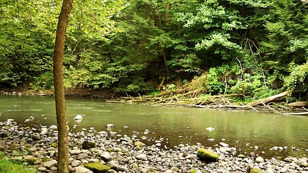 Creek in Mohican State Park