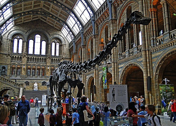 Dippy the dinosaur, NHM, London