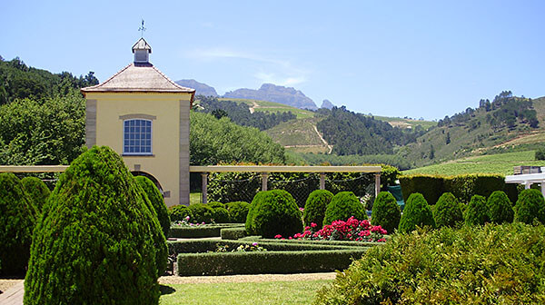 South African Wineyard