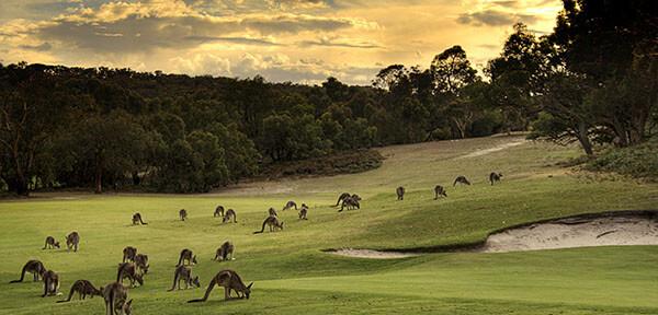 Kangaroos spotted in Australia