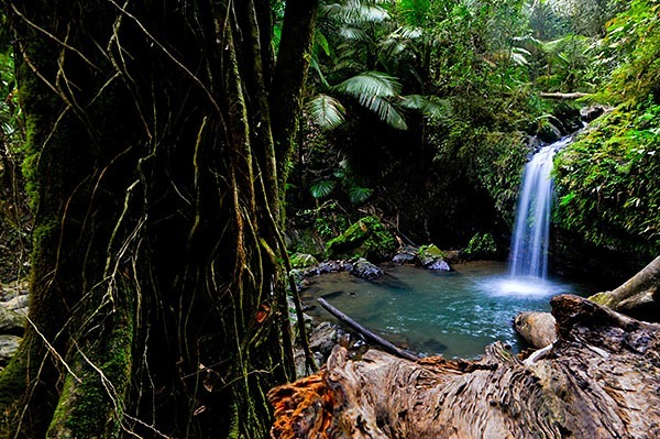 Natural pool in El Yunque rainforest