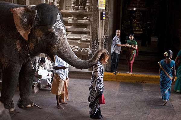 Elephant touching woman with his trunk