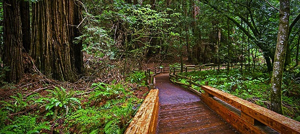 Trail in Muir Woods, CA