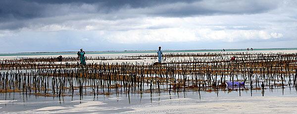 Fishing in Zanzibar