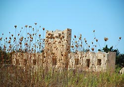 Flower stems obstructing a ruin