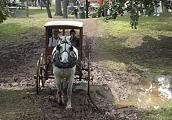 Buggy Festival in Church Point, Louisiana