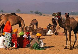 Pushkar Camel Fair in India