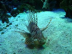 Aquarium shot at the Aquarium of the Pacific