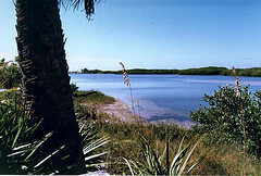 The lagoon on Caladesi Island, Florida