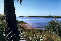 The lagoon on Caladesi Island, Florida