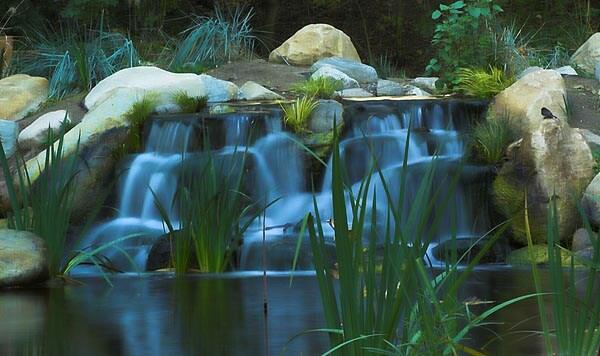 Pond in Descanso Gardens, Los Angeles