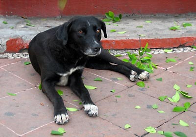 A stray dog in Taxco.