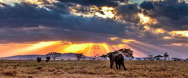 Tanzania's wilderness