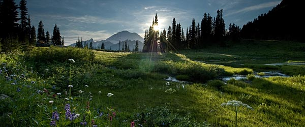 Tipsoo Meadow in Washington State